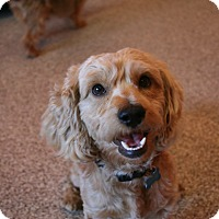 Adopt A Pet :: Teddy - Adoption Pending - Gig Harbor, WA