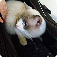 Adopt A Pet :: Fergus - Broomall, PA