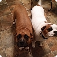 Adopt A Pet :: Mitz and Mona - Bardonia, NY