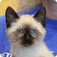 Adopt A Pet :: Freddie - ADOPTION PENDING!! - Potomac, MD