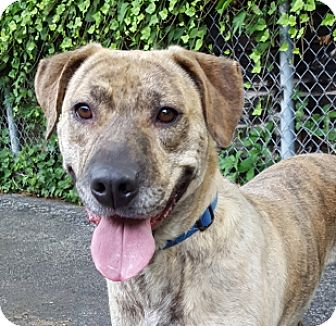 Terrier (Unknown Type, Medium) Mix Dog for adoption in Port Washington, New York - Savannah