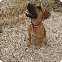 Adopt A Pet :: Tracie - Meridian, ID