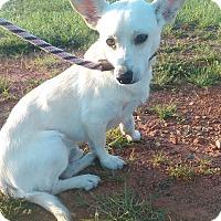 Adopt A Pet :: Jasp - Lebanon, CT