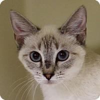 Adopt A Pet :: Yoda - Red Bluff, CA