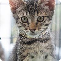 Adopt A Pet :: Honey - New York, NY