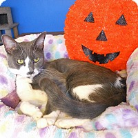 Adopt A Pet :: Bailey - Glendale, AZ
