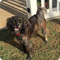 Adopt A Pet :: Ramsey - Plano, TX