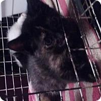 Adopt A Pet :: Luna - Canal Winchester, OH