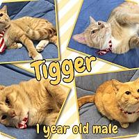 Adopt A Pet :: TIGGER - Lexington, NC