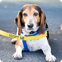 Beagle Mix Dog for adoption in Hayes, Virginia - Ewan