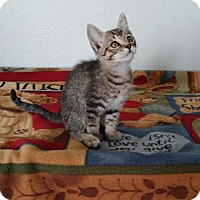 Adopt A Pet :: Gage - China, MI