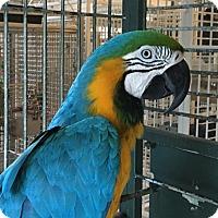 Adopt A Pet :: Ferguson - Punta Gorda, FL