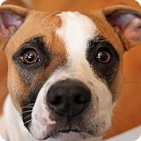 Adopt A Pet :: Baby Ben - Mount Laurel, NJ