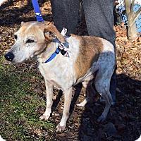 Labrador Retriever Mix Dog for adoption in Mississauga, Ontario - Cruz