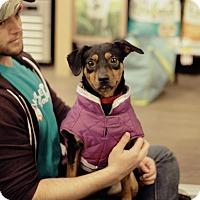 Adopt A Pet :: Reason - Marietta, GA
