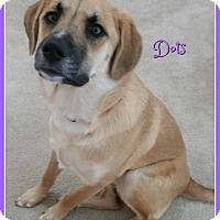 Adopt A Pet :: Dots - Elburn, IL
