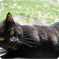 Adopt A Pet :: Trixy - Xenia, OH