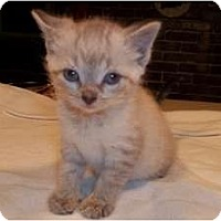 Adopt A Pet :: Winnie - Acme, PA
