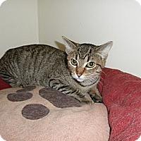 Adopt A Pet :: Jennie - Milwaukee, WI