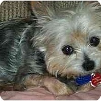 Adopt A Pet :: Evie - Gulfport, FL