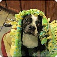 Adopt A Pet :: Jax - Temecula, CA