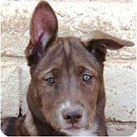 Adopt A Pet :: Jazzy - Gilbert, AZ