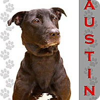 Adopt A Pet :: Austin - Dallas, TX