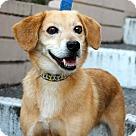 Adopt A Pet :: Hoyt