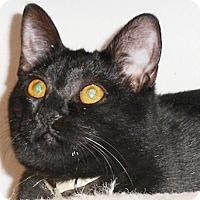 Adopt A Pet :: Yasmine - North Highlands, CA