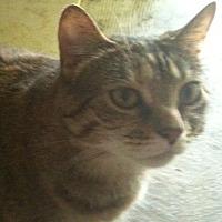 Adopt A Pet :: Baby - Memphis, TN
