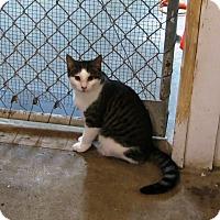 Adopt A Pet :: Ava - Geneseo, IL