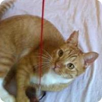 Adopt A Pet :: Porter - Mission Viejo, CA