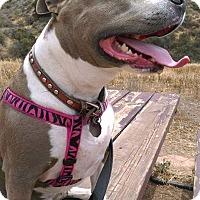 Adopt A Pet :: NINA - Carpenteria, CA