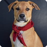 Adopt A Pet :: Hank - Baton Rouge, LA