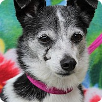 Adopt A Pet :: BLANCA Low $45 Fees-Spayed - Red Bluff, CA