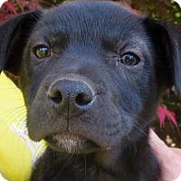 Adopt A Pet :: Jada - Barnegat, NJ