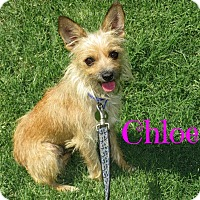 Adopt A Pet :: Chloe - Scottsdale, AZ