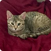 Adopt A Pet :: Tinker Bell - Bulverde, TX