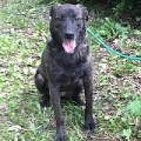 Catahoula Leopard Dog Mix Dog for adoption in Stafford, Virginia - Patches