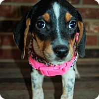 Adopt A Pet :: River - Sawyer, ND