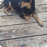 Adopt A Pet :: Lamont - Fairmont, WV