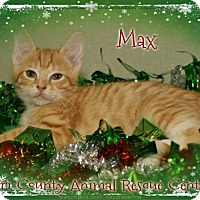 Adopt A Pet :: Max - Shippenville, PA