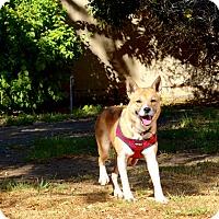 Adopt A Pet :: JOJO - Valley Village, CA