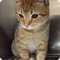 Adopt A Pet :: Prince Harry - Friendswood, TX