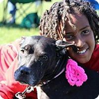 Adopt A Pet :: AVA - Philadelphia, PA