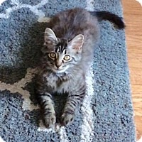 Adopt A Pet :: Harry - Gainesville, FL