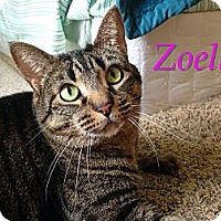 Adopt A Pet :: Zoella - Foothill Ranch, CA