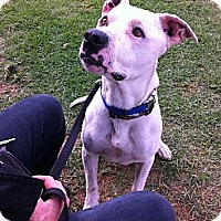 Adopt A Pet :: Carlton - Carpenteria, CA