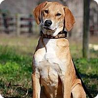 Adopt A Pet :: BUCK - Albany, NY