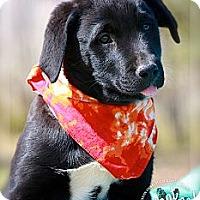 Adopt A Pet :: Tippy - Albany, NY